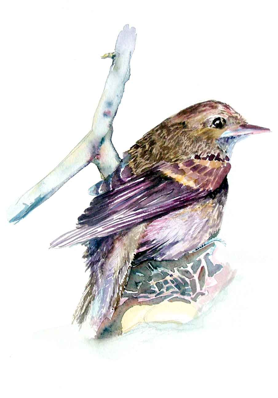 "A Watercolor by Mindy. This is a ""Fly Catcher""."