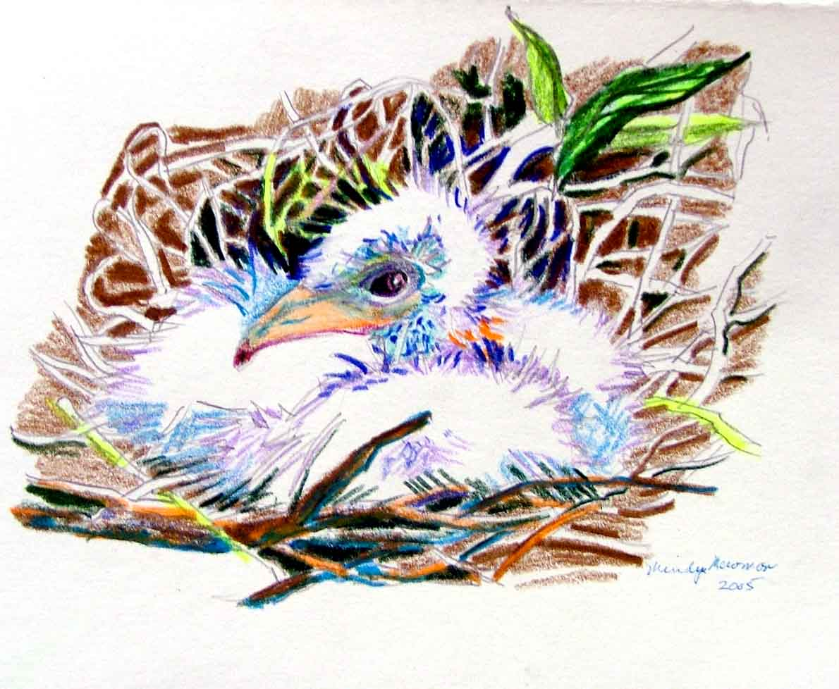 The Baby Sea Gull is a colored pencil by Mindy Newman.