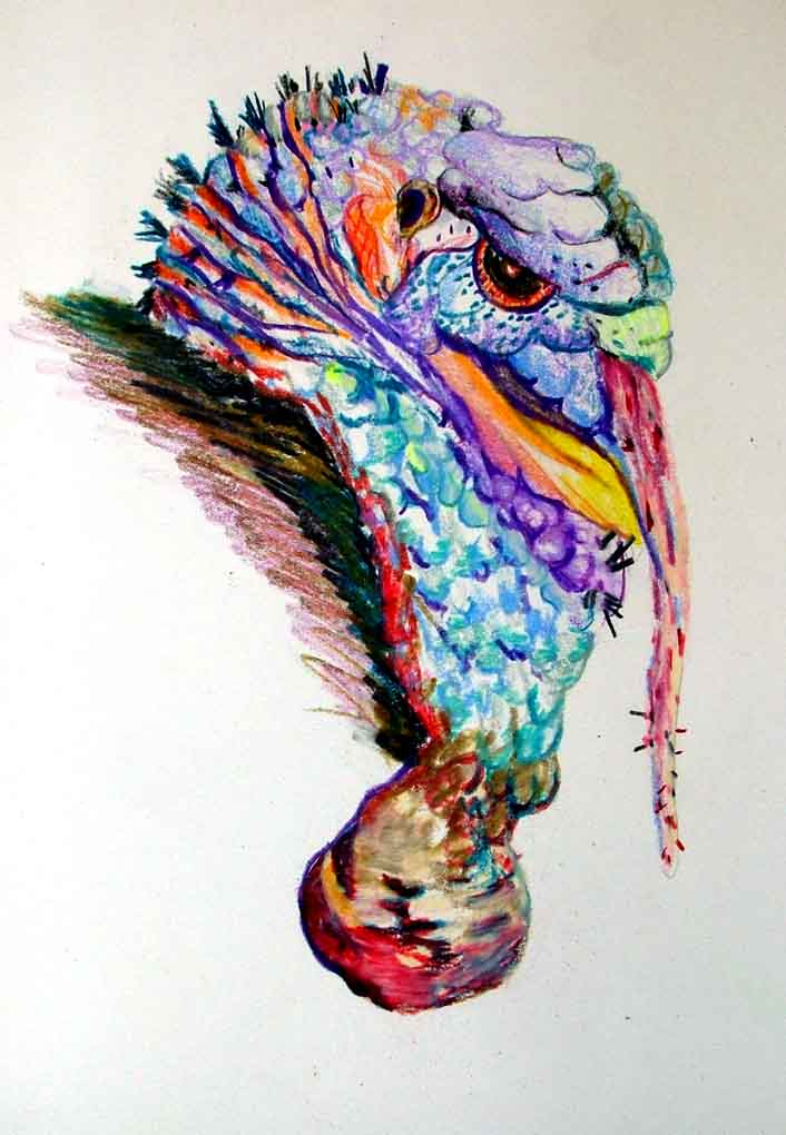 """Wild Turkey"" is a colored pencil illustration, by Mindy Newman"